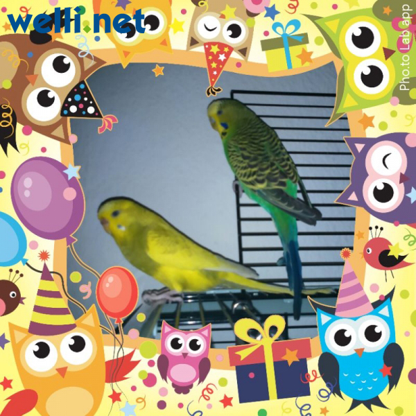 Happy Birthday welli.net