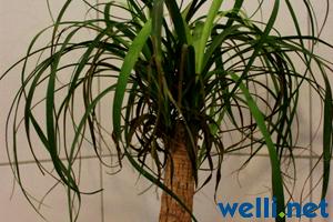 pflanzen und wellensittiche buchstabe e wellensittich portal. Black Bedroom Furniture Sets. Home Design Ideas