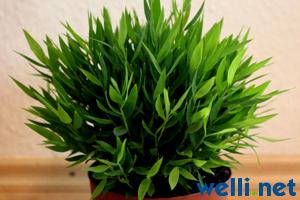Pflanzen Und Wellensittiche Buchstabe B Wellensittich Portal