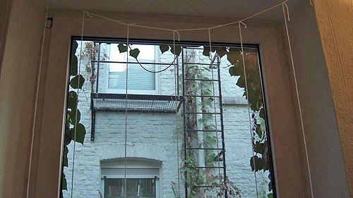 Fensterscheiben Sichern Vor Gegenfliegen