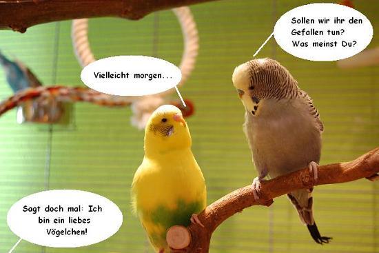 Papagei bilder