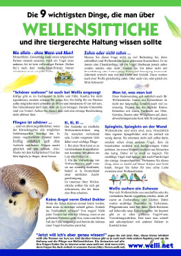 Infoblatt Wellensittiche