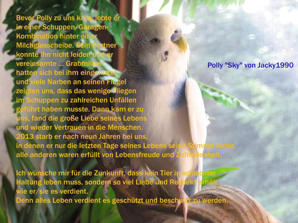 Wellensittich-Hahn Polly von Jacky1990